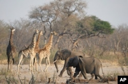Land as dry as a bone in Zimbabwe as wild animals succumb to a devastating drought
