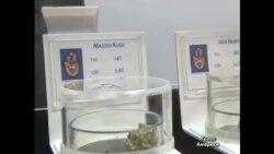 Медична марихуана у США - лише для важко хворих