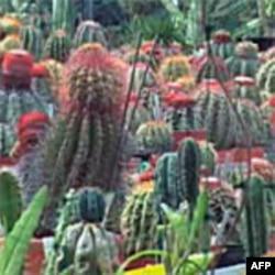U botaničkoj bašti čuva se veliki broj ugroženih biljnih vrsta