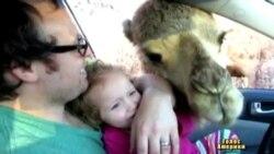 """Верблюд """"привітав"""" родину"""