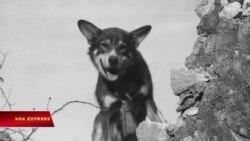 Chó nghiệp vụ được truy tặng huân chương anh hùng