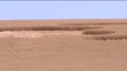 Інопланетяни завдали шкоди американським фермерам