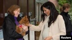 "Meghan Markle, yang bergelar Duchess of Sussex, bertemu ""Foxy"" dalam kunjungan ke pusat amal untuk satwa, Mayhew, di London, Inggris, 16 Januari 2019."