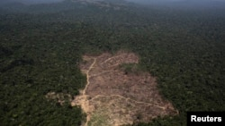 FILE - This aerial view shows a tract of Amazon jungle recently cleared by loggers and farmers near the city of Novo Progresso, Para state, Brazil, Sept. 22, 2013.