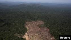 An aerial view of a tract of Amazon jungle recently cleared by loggers and farmers near the city of Novo Progresso, Para state, Brazil, Sept. 22, 2013.