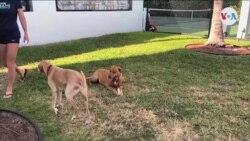Mascotas en casa impactadas por COVID-19