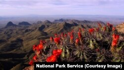 Big Bend National Park: A Texas Treasure