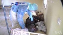 Manchetes Africanas 9 de Abril