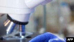 Các nhà sinh học tái tạo các bước quan trọng trong tiến hóa của đời sống