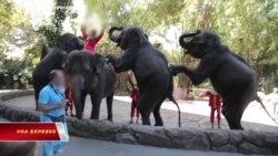 LHQ cấm đưa voi con vào đoàn xiếc hay sở thú