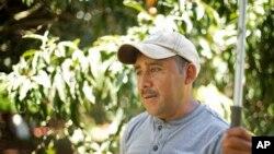 Un travailleur devant des plants de café