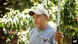 Le Mexicain Rafael Cruz devant la pépinière qui l'emploie à Homestead, en Floride ( mai 2013)