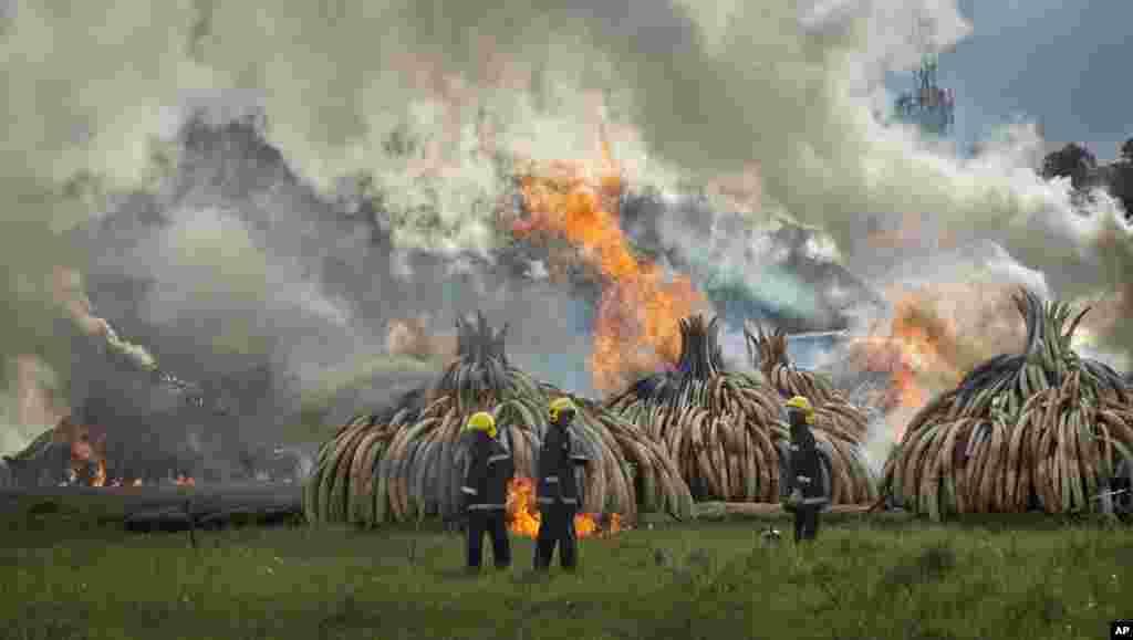 Des pompiers se tiennent prêt les tonnes d'ivoire incinérées à Nairobi, le 30 avril 2016.