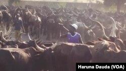 Wasu cikin shanun sata da aka gano a Borno