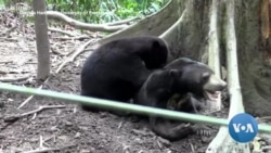 How the Smallest Bears 'Talk' to Each Other