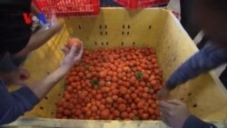 Waste Not Want Not for Israeli Food Bank