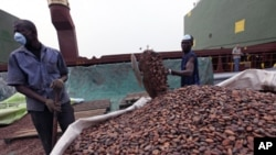Workers gather bags of cocoa at the port of Abidjan, 17 Jan 2011