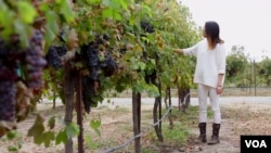 Heigi Wan, who is from China, is a student at the University of California-Davis, which has one of the country's leading wine making programs.