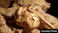 ''Little Foot'' aurait vécu il y a environ 3,67 millions d'années, explique Laurent Bruxelles de l'INRAP en France (Photo LAURENT BRUXELLES, archives AFP)