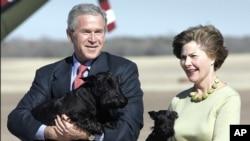 Джордж та Лора Буш зі своїми собаками Барні та Міс Бізлі, штат Техас