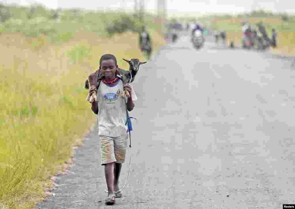 A boy carries a goat along a road near the town of Sake, 27 kilometers west of Goma, DRC, November 27, 2012.