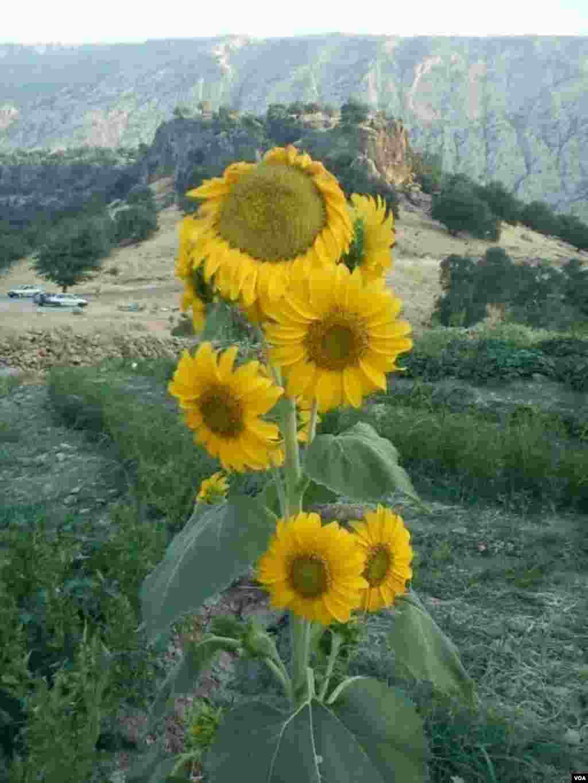 پشته لارت روستای آبهرپایین شهرستان بدره عکس: عابدین ملکی (ارسالی شما)