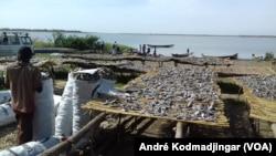 La commercialisation de vente de poisson frais sera modernisée au Tchad, le 8 juillet 2020. (VOA/André Kodmadjingar)
