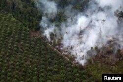 Pembakaran hutan di dekat perkebunan kelapa sawit di Kabupaten Kapuas, dekat Palangka Raya, Kalimantan Tengah (Reuters).