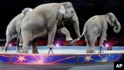 Elefantes asiáticos actuaron por última vez en el circo Ringling Brothers and Barnum & Bailey en Providence, Rhode Island, el domingo, 1 de mayo de 2016.