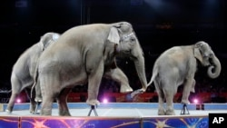 Asian elephants perform for the final time in the Ringling Brothers and Barnum & Bailey Circus, May 1, 2016, in Providence, Rhode Island.