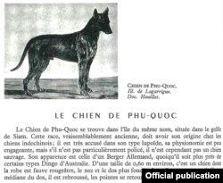 Đoạn miêu tả chó Phú Quốc trong sách Larousse 'Le Chien'.