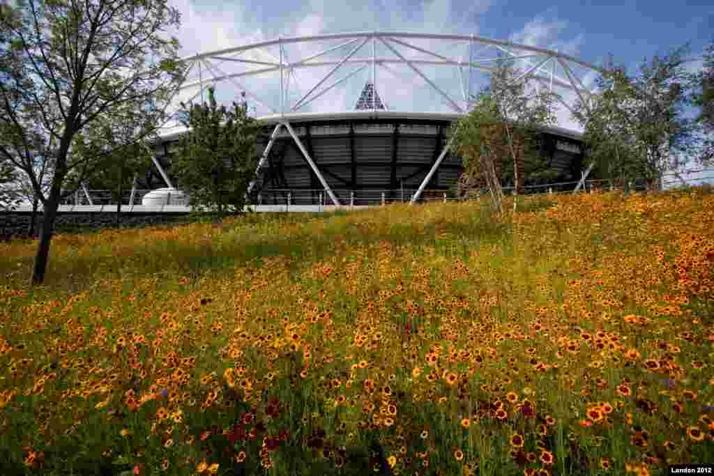 A meadow of cornflower, corn marigold, Californian poppy and prairie flowers, blooms around the Olympic Stadium. (Photo: David Poultney/London 2012)