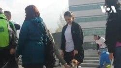 Preživjeli pas iz boksa azila u Prači