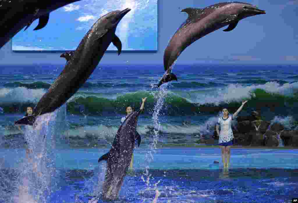 Trainers direct dolphins performing in Pyongyang, North Korea.