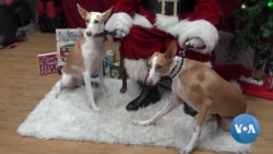 Dogs Pose with Santa for Christmas Photos