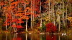 มหัศจรรย์ธรรมชาติ สีสันของฤดูใบไม้เปลี่ยนสีที่เวอร์จิเนีย