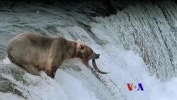 美国专讯:1)3D电影呈现美国国家公园自然奇观 2)柔软机器人海底温柔探秘