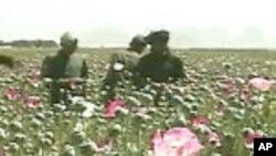 افغانستان او د نشيي موادو ستونزه