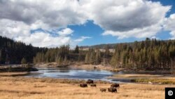 Yellowstone, taman nasional tertua di AS. (Carol M. Highsmith, Koleksi Perpustakaan Kongres)