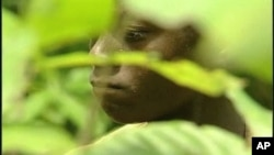A young man working in a cocoa field in Africa