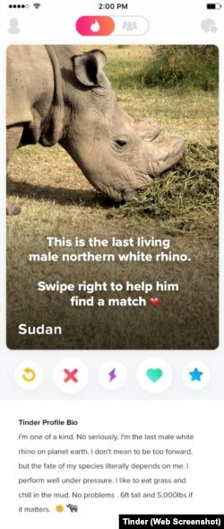 A screenshot from Tinder, showing the profile of Sudan.