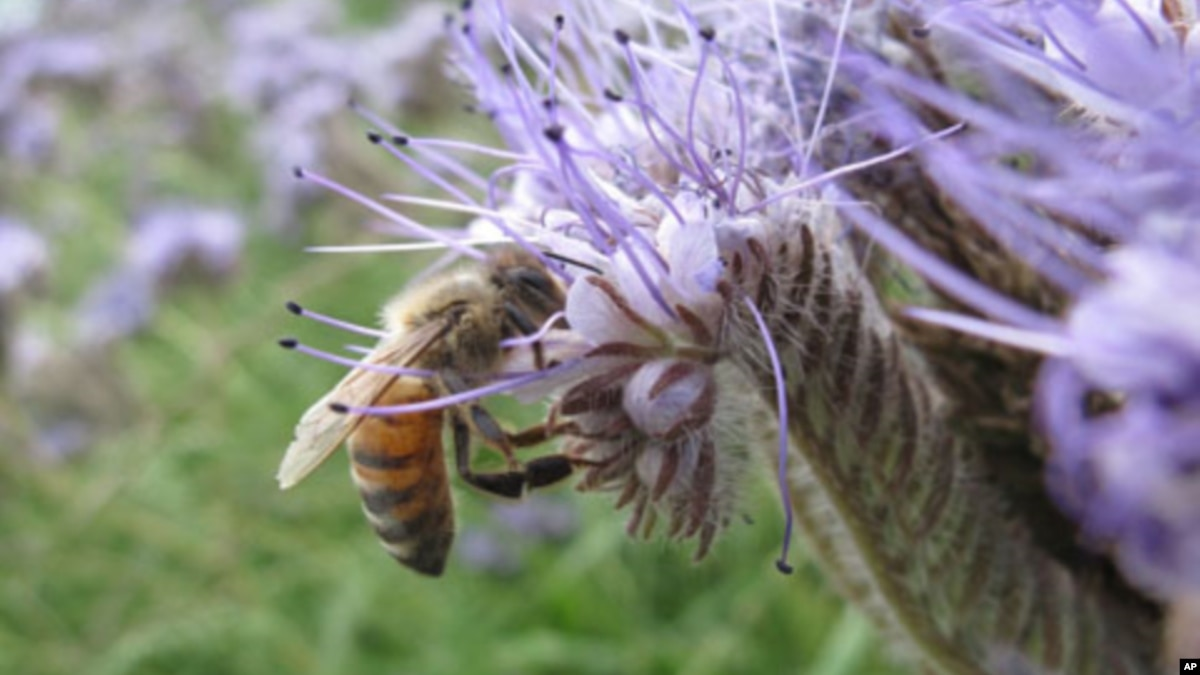 a study of the bees Quizlet provides study of chapter 3 secret life bees activities, flashcards and games start learning today for free.