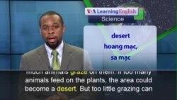 Phát âm chuẩn - Anh ngữ đặc biệt: Healthier Grass Means Profits for Cattle Ranchers (VOA)