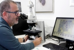 In this Thursday, Nov. 8, 2018 photo, Pantelis Katharios, senior researcher at the Hellenic Center for Marine Research on the Greek island of Crete, checks microscope imaging of a new parasite.