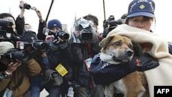 """Chó """"Ban"""" được cô chủ đến đón về"""