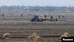 북한 신의주의 협동농장.