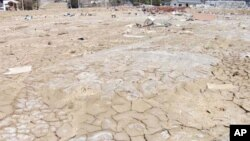 The March 2011 Japan tsunami contaminated some 20,000 hectares of rice paddies with salt.