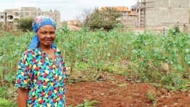 Kenya's urban farmers often use wastewater to grow their crops because it's free and has the added advantage of fertilizing their plants