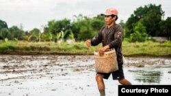 Lúa trồng trên 25 triệu hecta đất bị thất thoát mỗi năm vì nạn ngập úng.