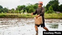 FILE - A rice farmer sows seeds in Oton, Iloilo, Philippines.